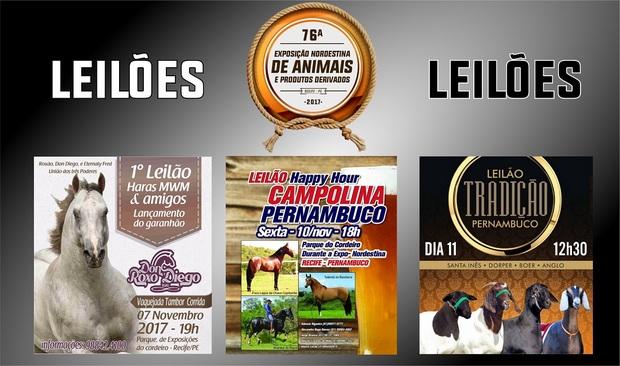 Leilões de equinos, caprinos e ovinos movimentam a Exposição de Animais