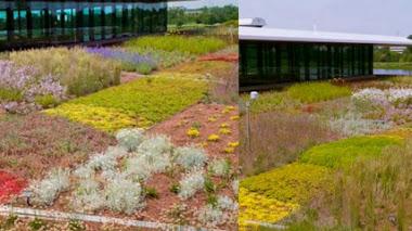 Jardín Botánico de Chicago: evaluación de plantas para azoteas verdes.The Green Roof Garden