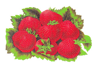 strawberry digital fruit download image