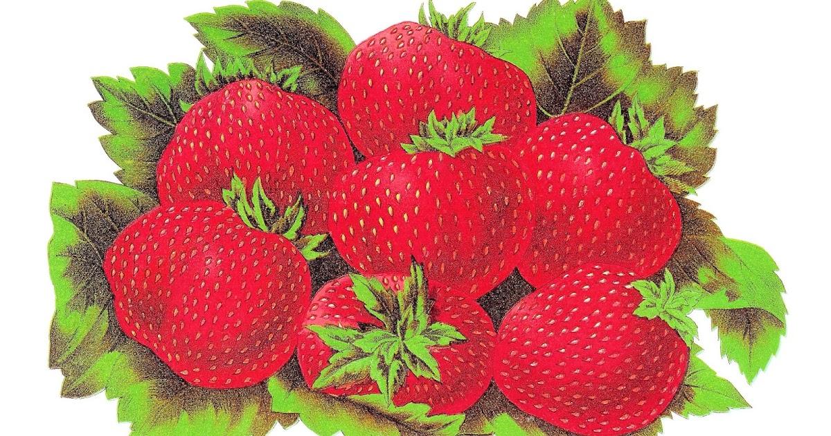 fruit strawberries 4 - photo #31