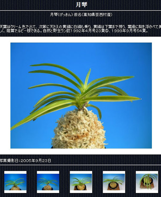 http://www.fuuran.jp/jiman_geekinn.html#%E6%9C%88%E7%90%B4%E3%81%AE%E8%A9%B3%E7%B4%B0