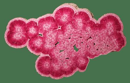 rodocrosita estalactita argentina mineral | foro de minerales