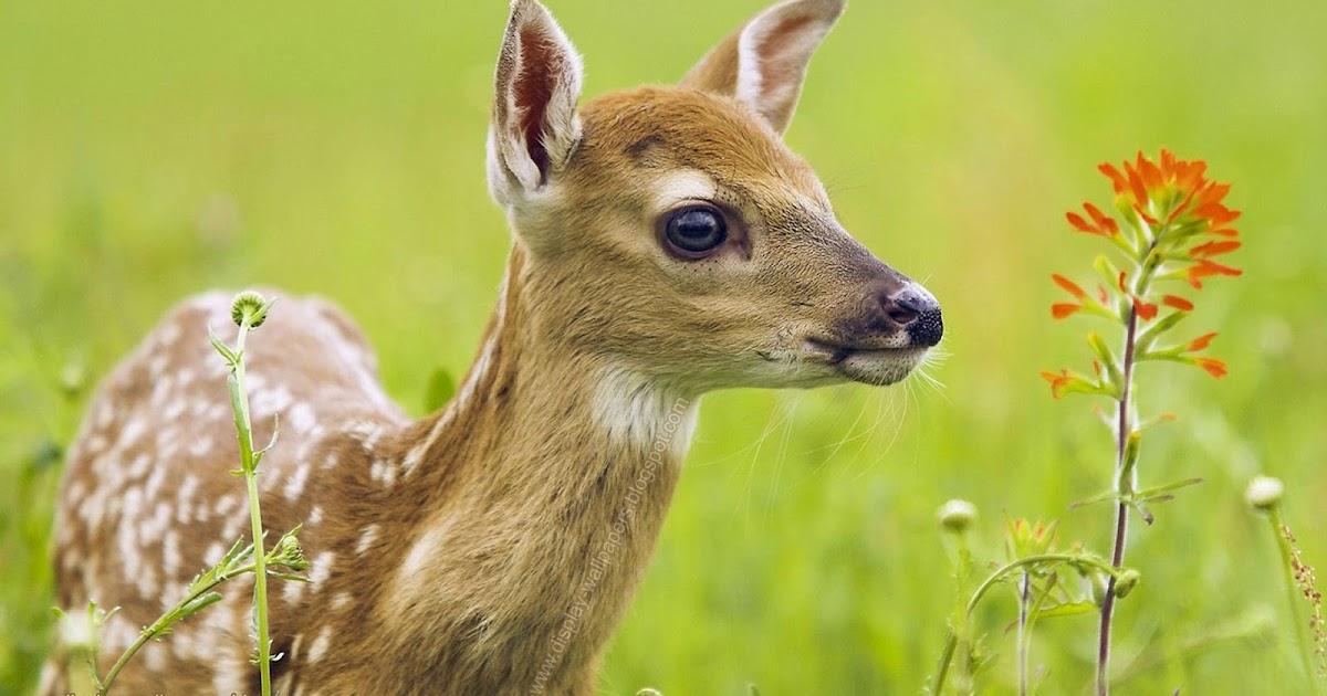 Wallpapers Download: Animals Wallpaper Hd 1080p