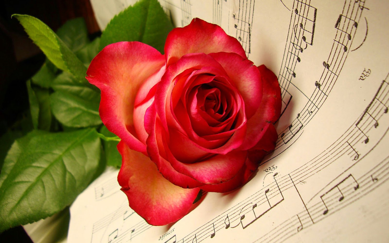 Top 25 red rose wallpapers hd download high definition - Hd rose wallpaper for android mobile ...