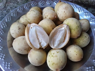 Benefits And Efficacy Of Duku Fruit For Health And Beauty - Healthy T1ps