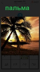 берег моря вечером, на котором стоит пальма