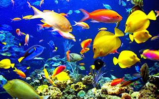 9700 Gambar Hewan Vertebrata Pisces Terbaik