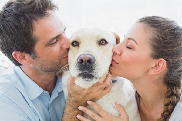 Κάποια σκυλιά προτιμούν το χάδι από το φαΐ
