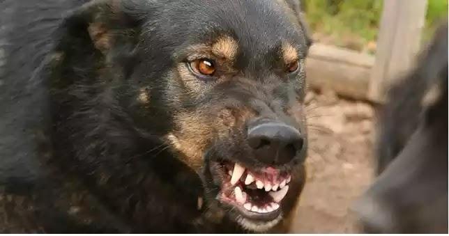 Στο νοσοκομείο κατέληξαν δύο άνδρες από επιθέσεις σκύλων