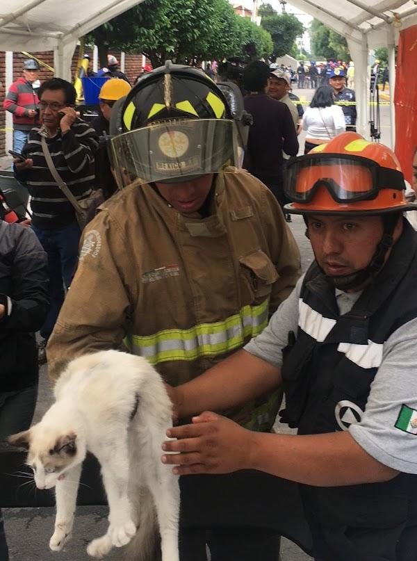 Elementos de protección Civil y Bomberos rescatan a un gato de edificio colapsado en Lindavista