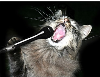 Singing Cats That Will Make You Smile Super Meow Meow