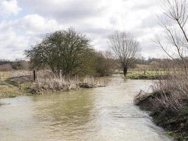Back Brook in Flood
