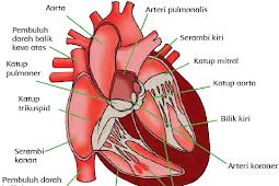 Mengenal Organ Peredaran Darah dan Gangguan pada Organ Peredaran Darah, Tema 4, Subtema 2, Pembelajaran 2