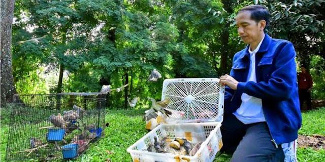 Tradisi Falsafah Jawa Tentang Burung Perkutut