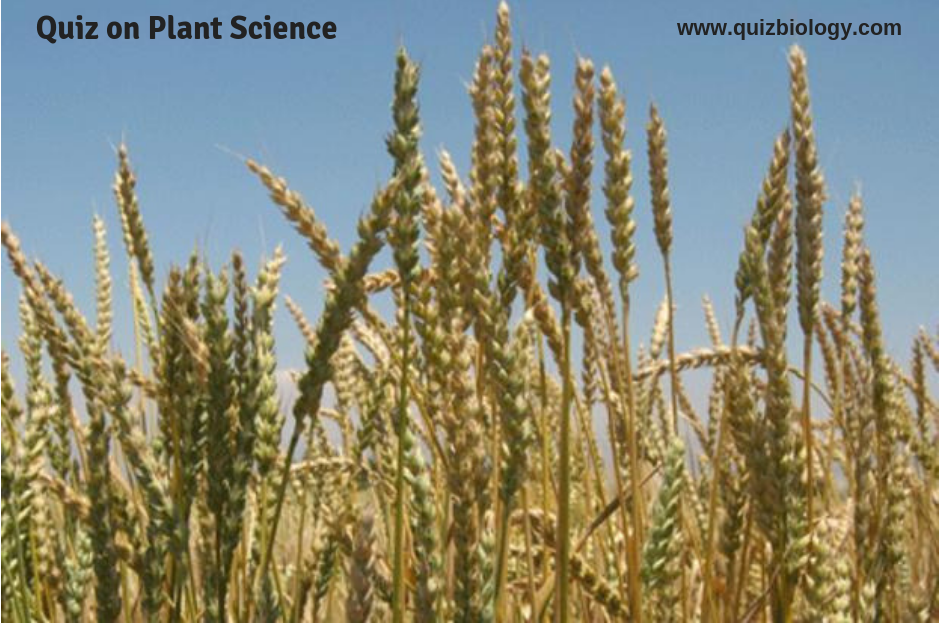 Quiz on Plant Science