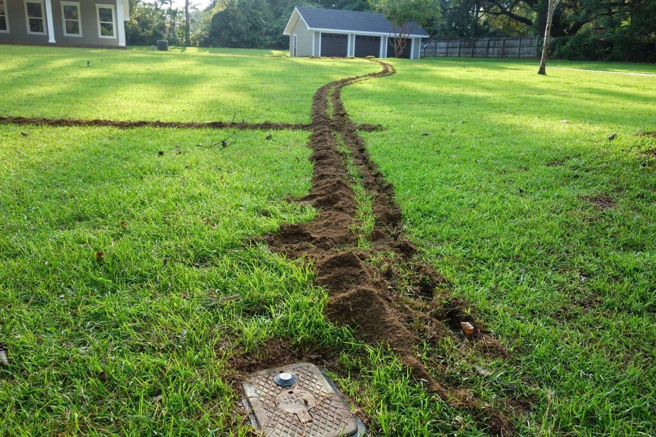 Florida Coal Cracker Chronicles: It Looks Like A Mole ...