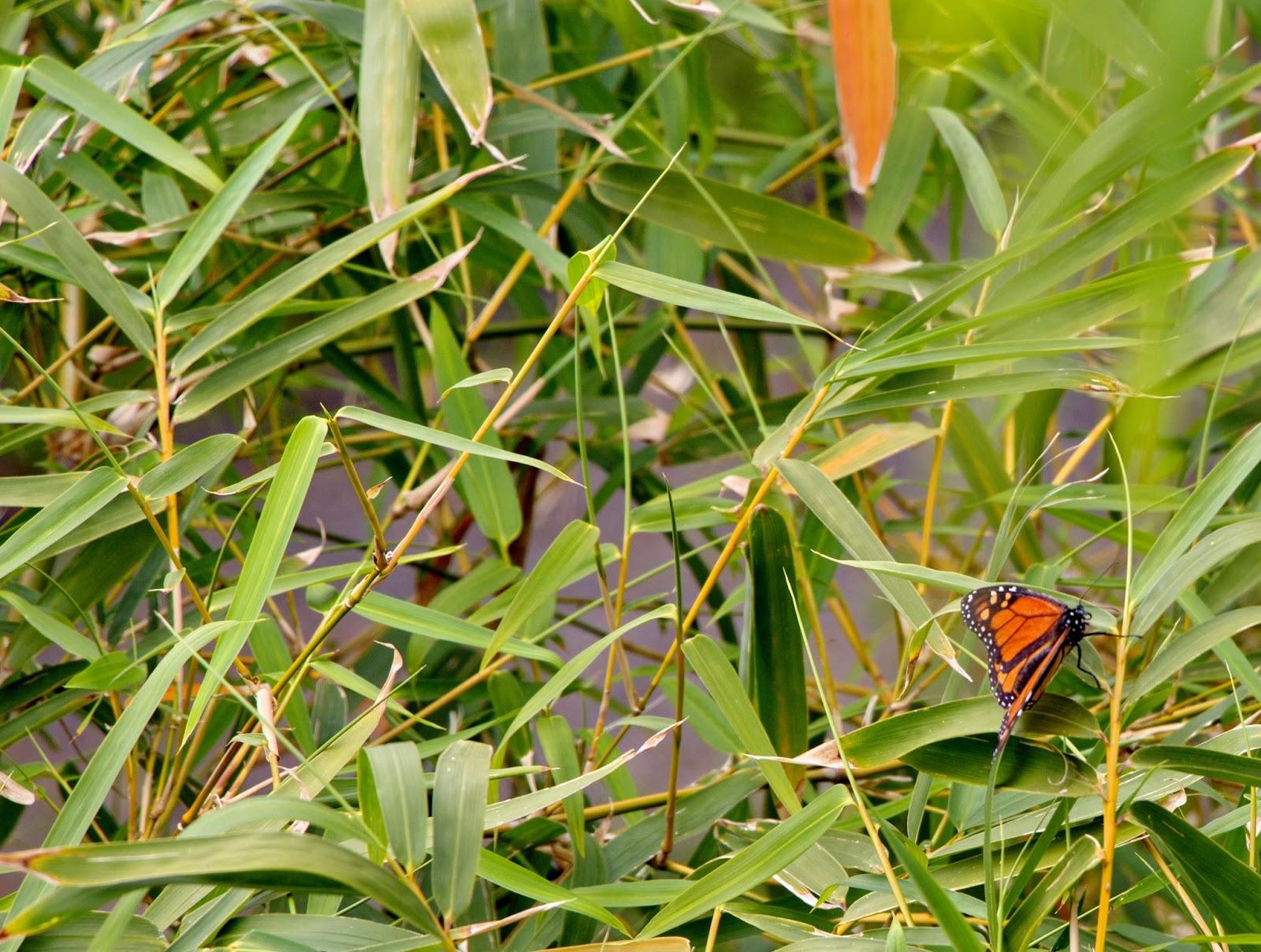 uma borboleta entre o verde