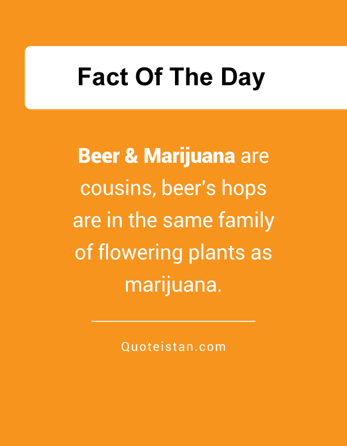 Beer & Marijuana are cousins, beer's hops are in the same family of flowering plants as marijuana.