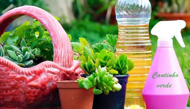 Usos do vinagre na horta e o jardim