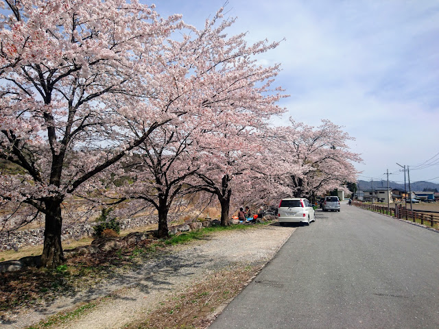 尾白川 桜
