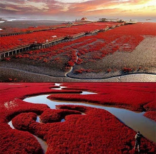 red beach china photo