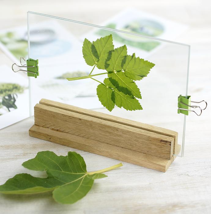 DIY Bilderrahmen | Holzaufsteller für Glasscheiben | Blatt