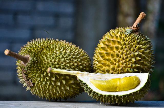 tanaman hias buah durian musang king