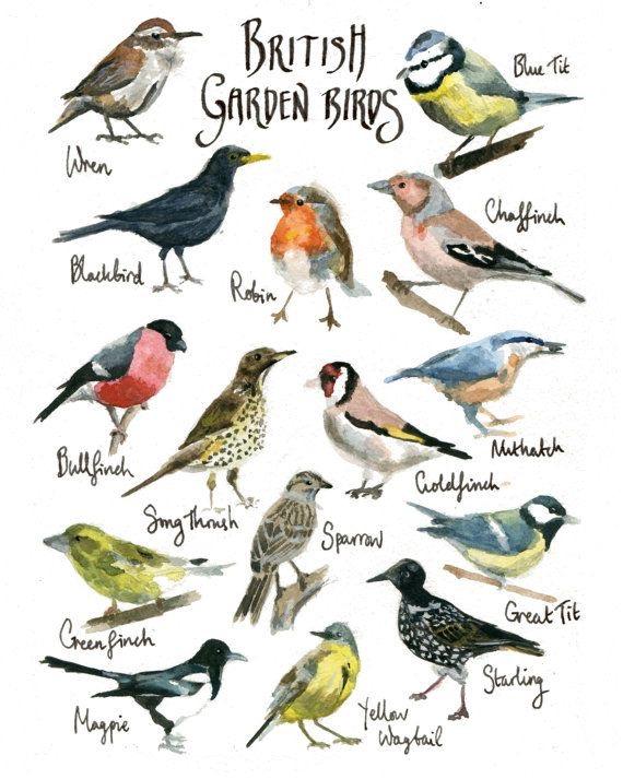 Pássaros de Jardim da Grã-Bretanha
