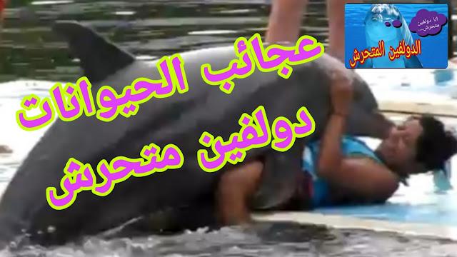 تحرش دولفين بسائحة فرنسية ويتسبب بمنع الزوار من السباحة