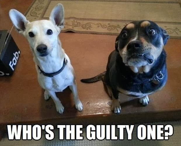 Funny Guilty Dog Meme Joke Picture