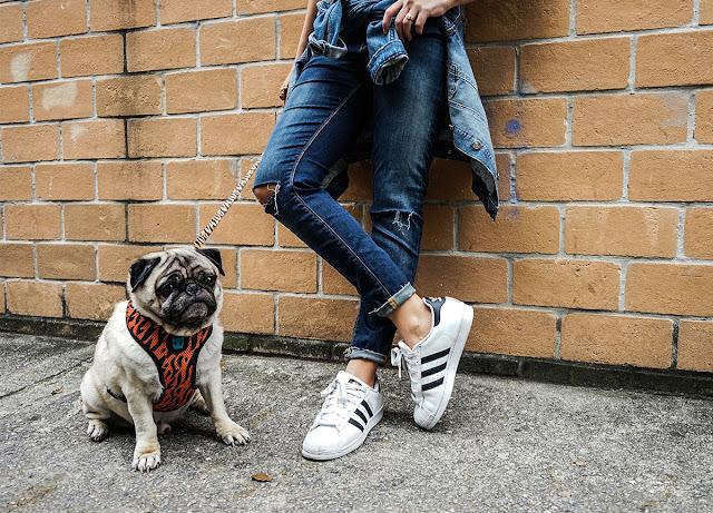 Wishlist: Zee.Dog, conectando cachorros e pessoas