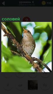 В свете солнца на ветке дерева сидит птица соловей и поет свои песни