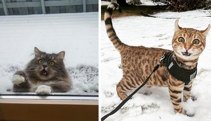 10 Ekspresi Kucing Saat Pertama Kali Merasakan Salju Ini Bikin Hati Jadi Adem