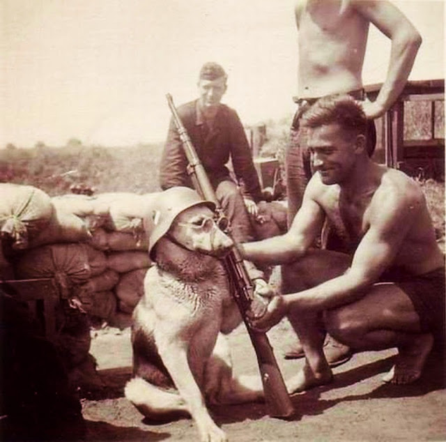 A dog being posed by a German soldier, early 1940′s