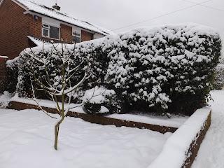 Snow in a garden
