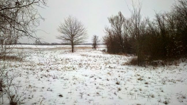 winter, snowfall, Countrified Hicks, snow on the homestead