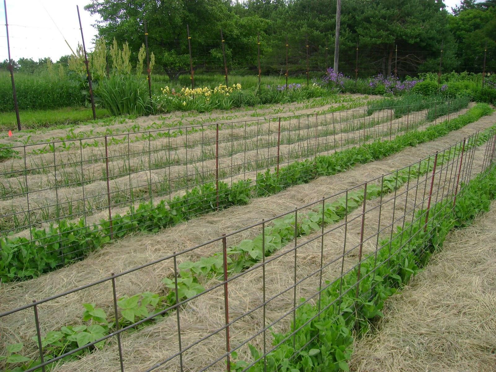 deep mulch gardening, the garden gate: deep mulch, no-till gardening: the family garden at, Design ideen