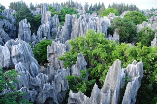 São 270 milhões de anos floresta de pedra