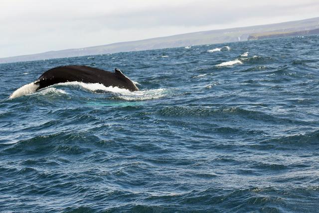 """לוויתן זה יצרת לשחק בו - תהלים ק""""ד"""