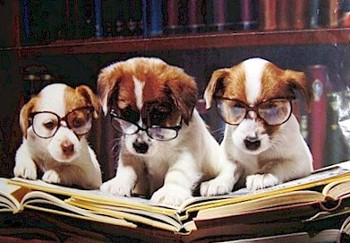 15 Animals That Make Us Feel Better About Getting Older ... |Puppy Reading