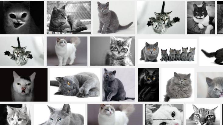 blanco negro imagenes