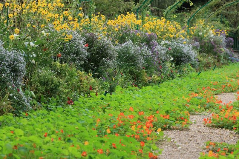 Flores de Rudbeckia y alfombra de capuchinas en Jardin Claude Monet en Giverny en otoño