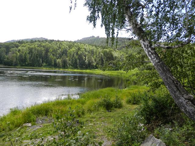 Берёза на берегу озера Аракуль