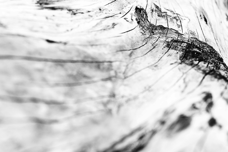 Pori, Visualaddict, valokuvaaja, Frida Steiner, puu, struktuuri
