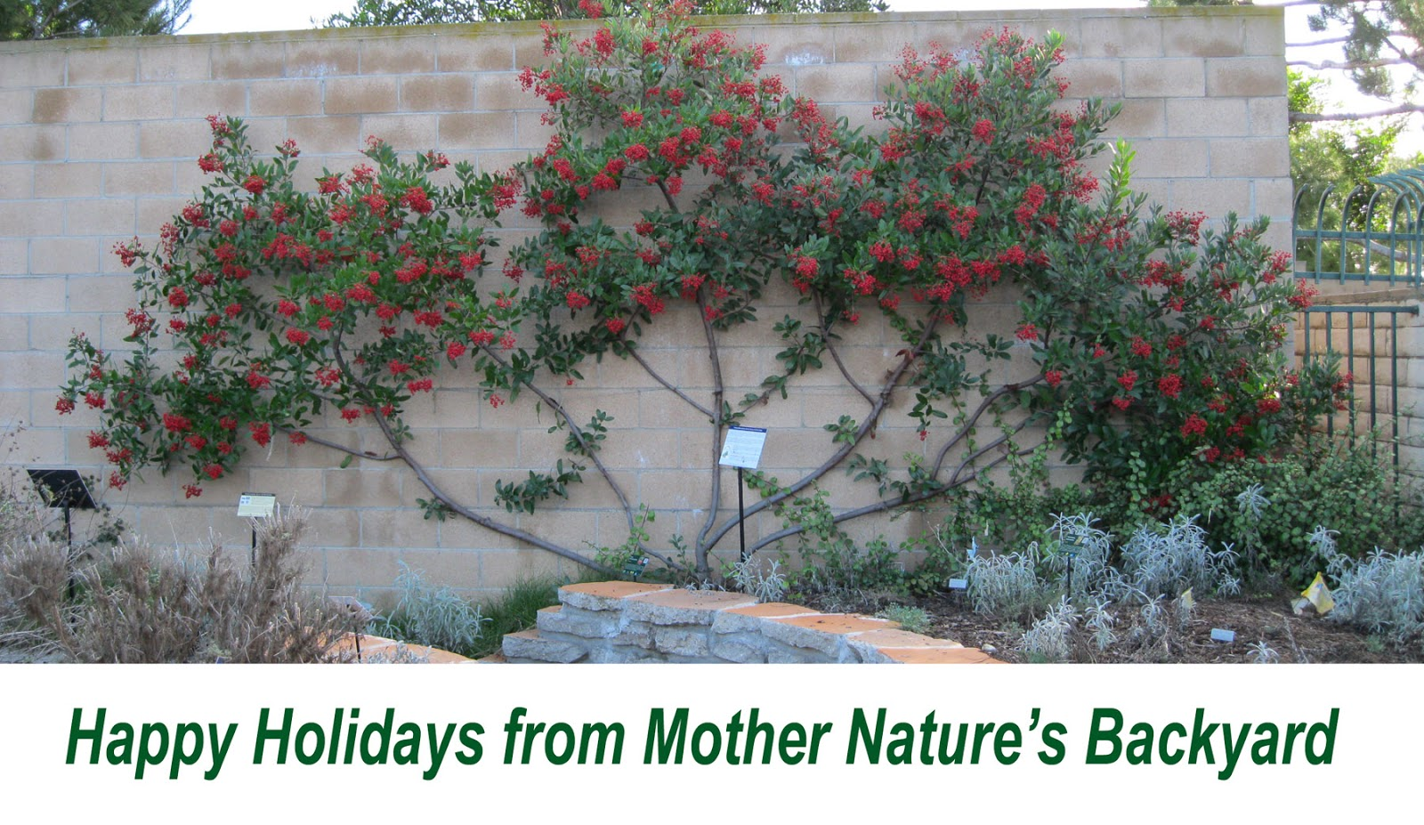 mother nature u0027s backyard a water wise garden 2016