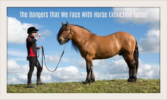 The Dangers That We Face With Horse Extinction Today!