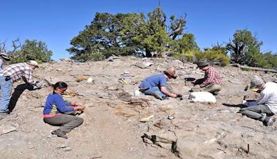 Fosil Spesies Baru Dinosaurus Lapis Baja ditemukan di Utah
