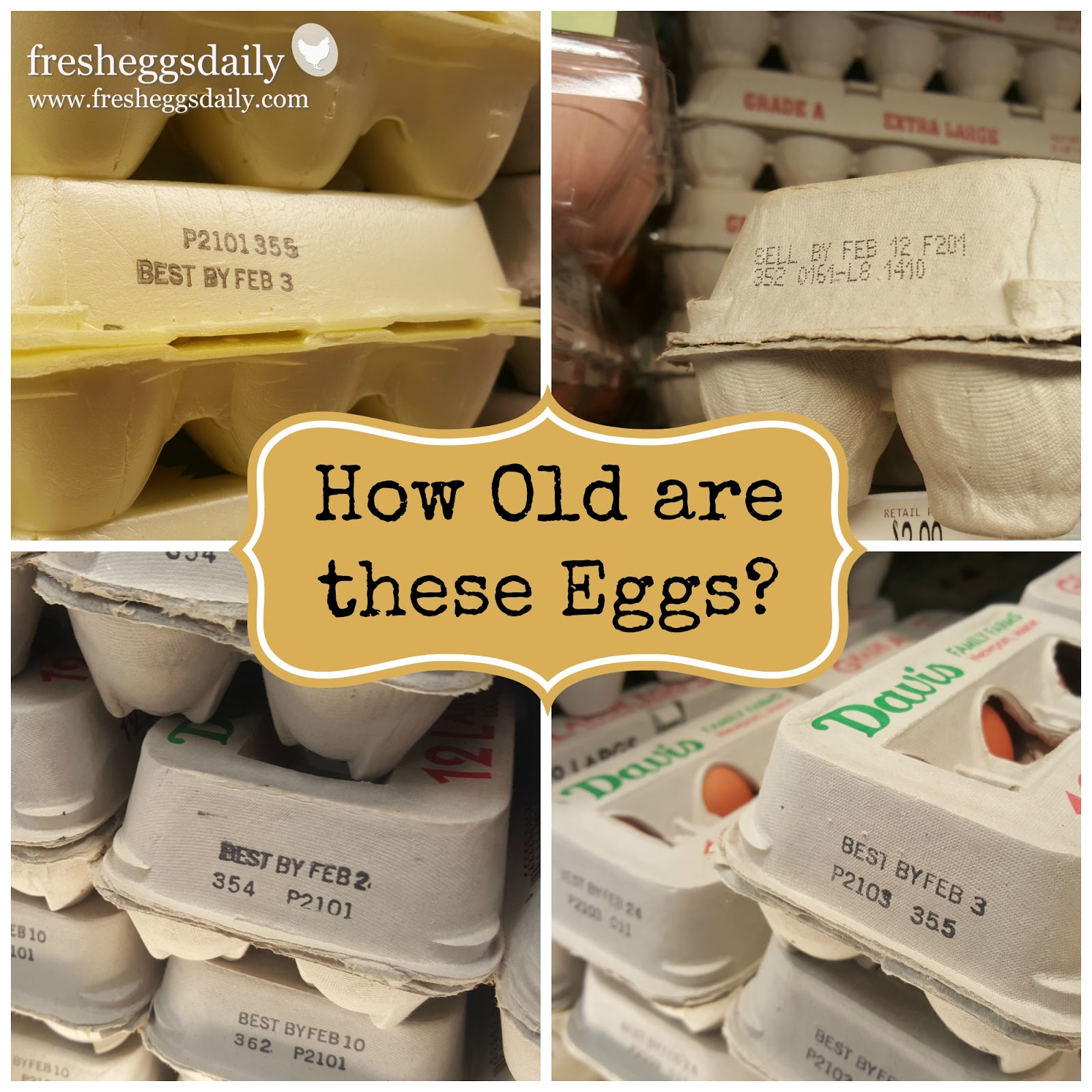 How Old is the Average Supermarket Egg? | Fresh Eggs Daily®