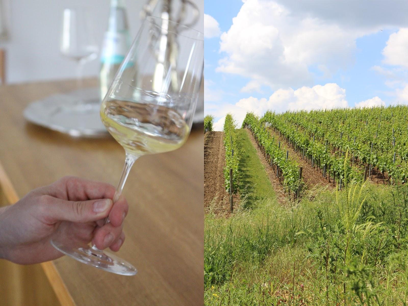Ein Glas Weißwein und rheinhessische Weinberge