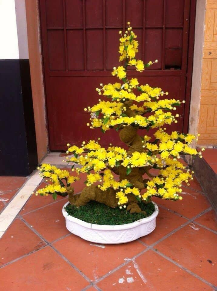 Goc bonsai mai dao tai Thanh Xuan